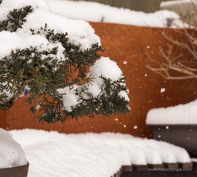 Bonsai Branch with Snow