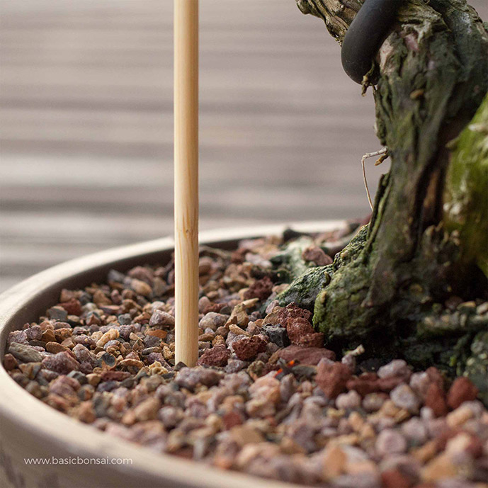 Watering Bonsai with Chopstick to Measure Moisture