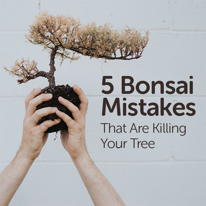 Bonsai Mistakes