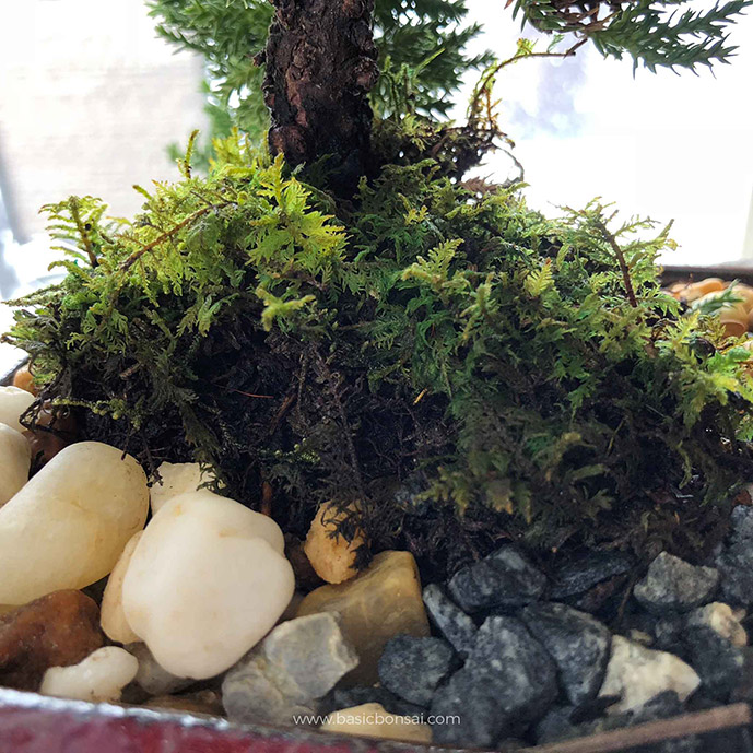 Moss Covering Trunk Base
