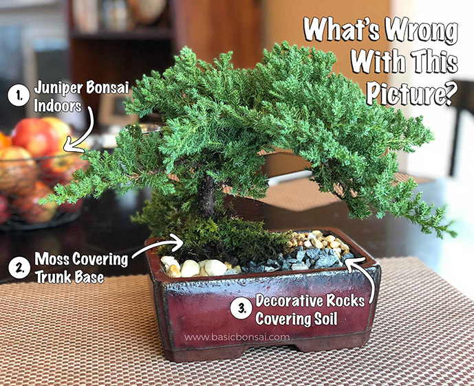 What's Wrong with This Bonsai