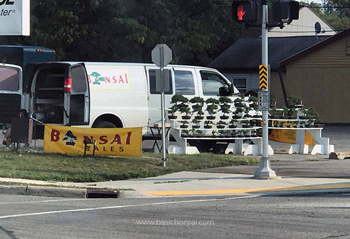 Roadside Bonsai Merchant
